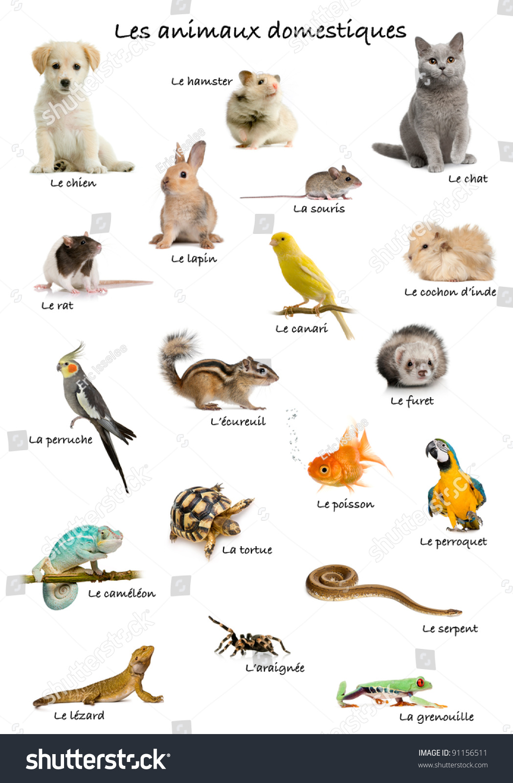 Collage Of Pets And Animals In French In Front Of White