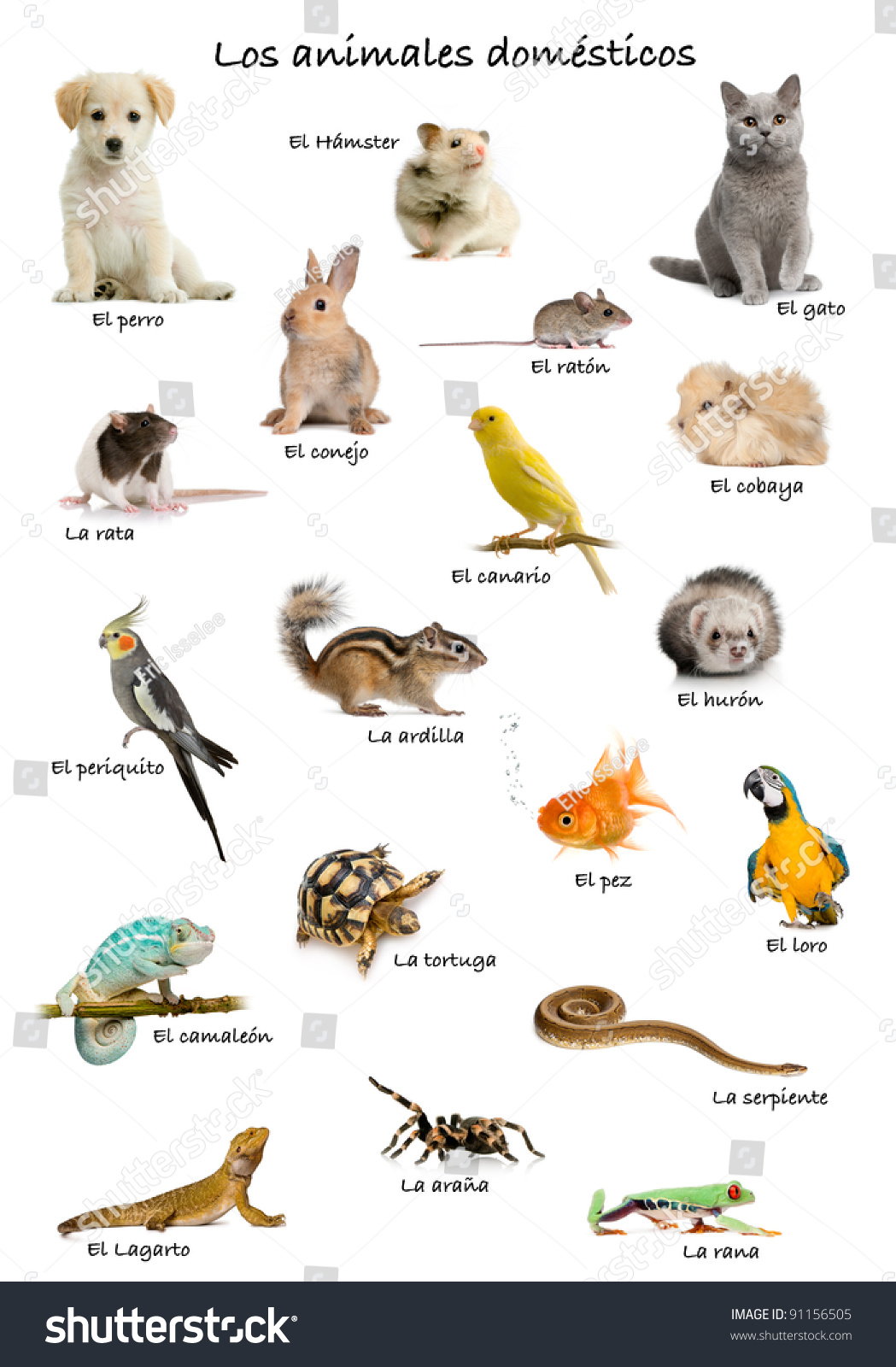 Collage Pets Animals Spanish Front White Stock Photo