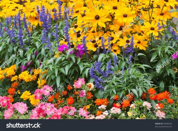 purple and orange flower garden Colorful Flower Garden Yellow Blue Orange Stock Photo