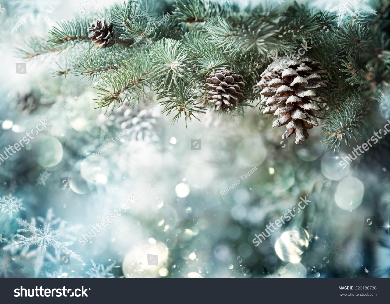 Fir Branch With Pine Cone And Snow Flakes Christmas