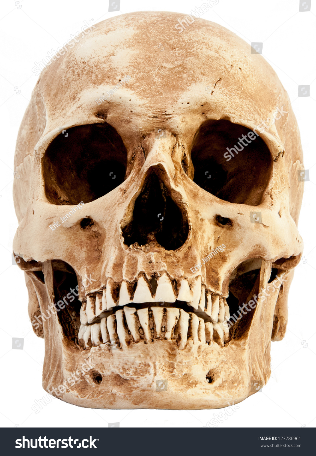 Front View Human Skull Stock Photo
