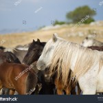 Group Beautiful Wild Horses Nature Stock Photo Edit Now 694528198