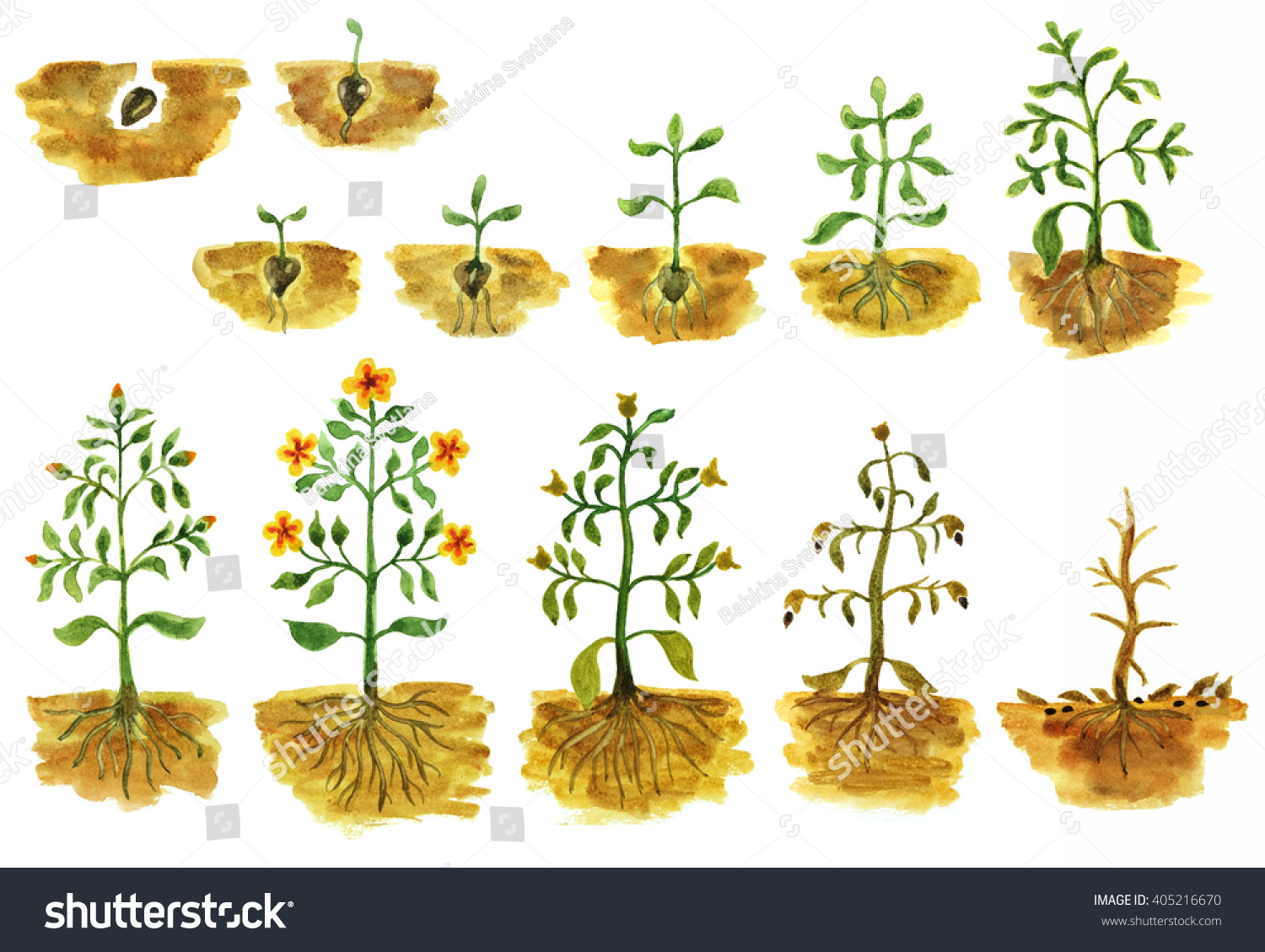 Hand Painted Watercolor Illustration Plants Growing Stock