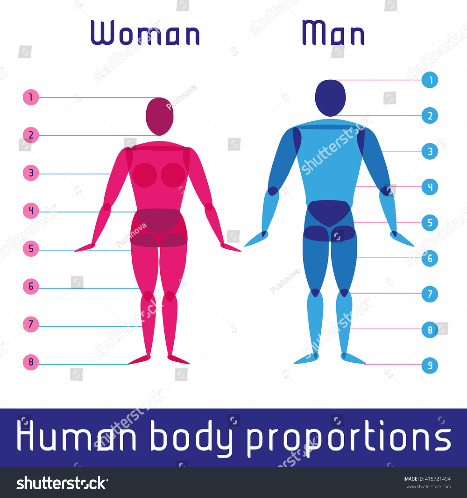Human Body Measurements And Proportions Education