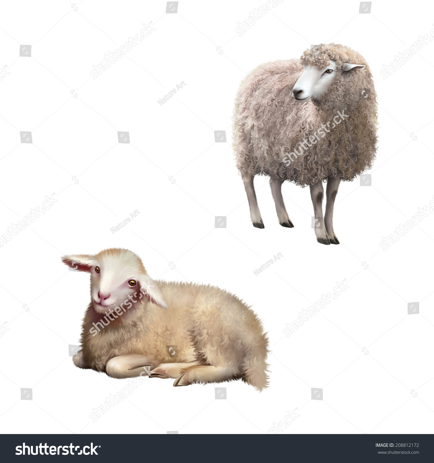 Illustration Front View Sheep Looking Away Stock