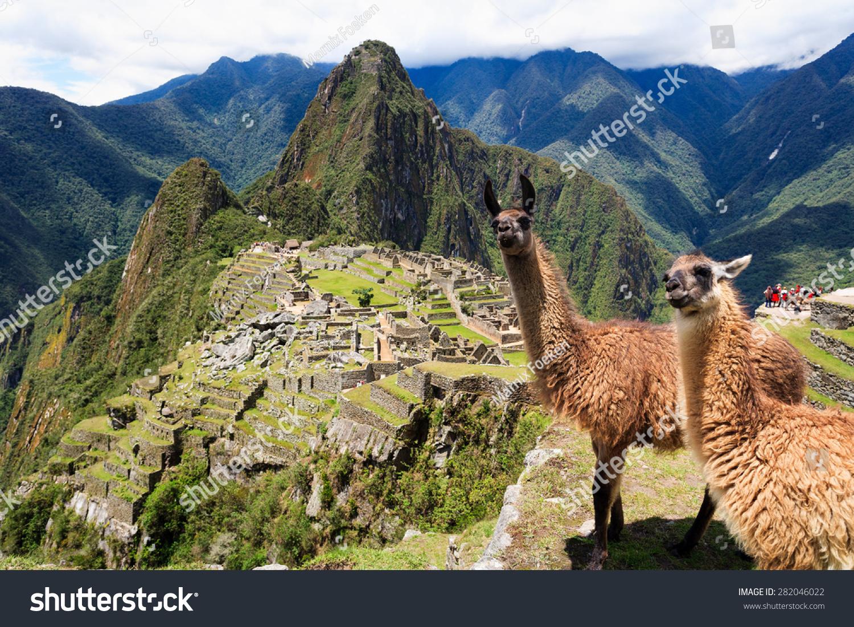 Llama At Historic Lost City Of Machu Picchu