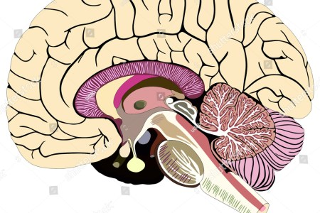 Interior inferior pontine sulcus 4k pictures 4k pictures full chapter anterior communicating artery the brain stem fig the pons test neuroscience brainstem quizlet pyramidal decussation where is the inferior median ccuart Choice Image