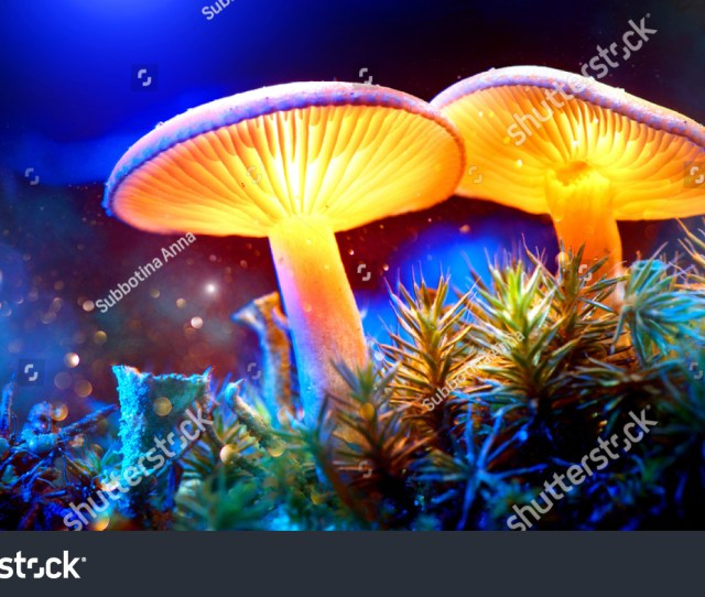 Mushroom Fantasy Glowing Mushrooms In Mystery Dark Forest Close Up Beautiful Macro Shot