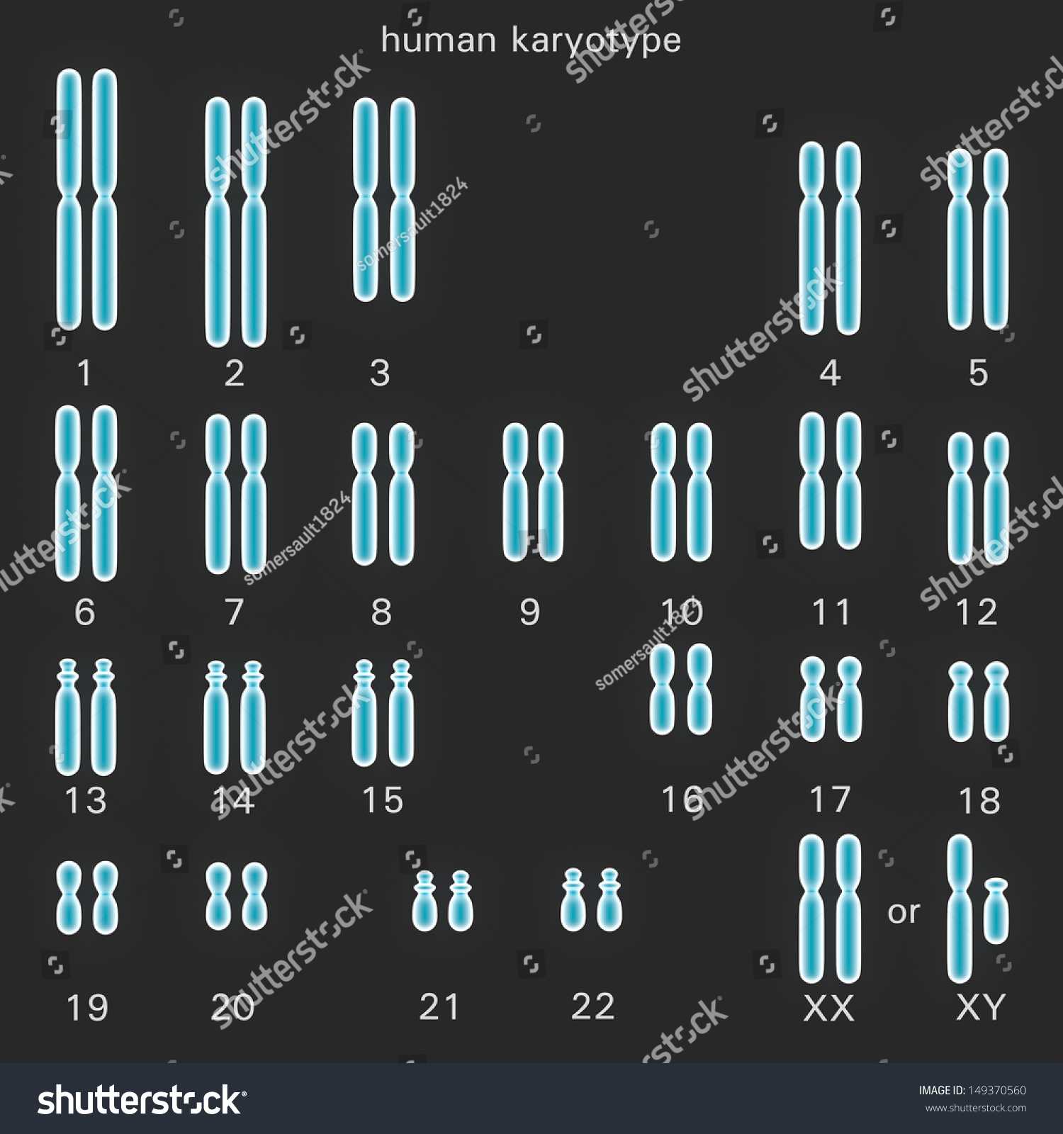 Normal Human Karyotype Which Diploid Pairing Stock Illustration