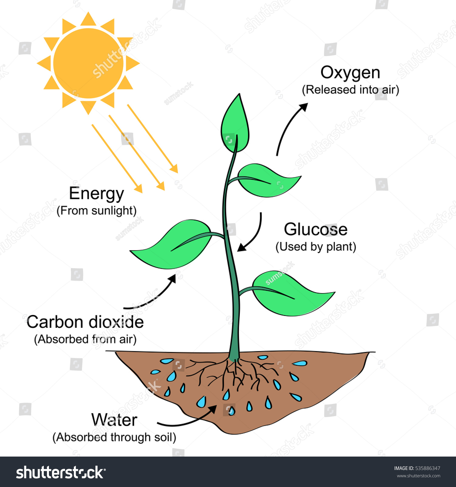 Photosynthesis Process Labelled Illustration Stock