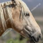 Portrait Beautiful Wild Horse Stock Photo Edit Now 1176957295