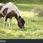 Portrait Cute Horse Red Halter Stock Photo Edit Now 409901611