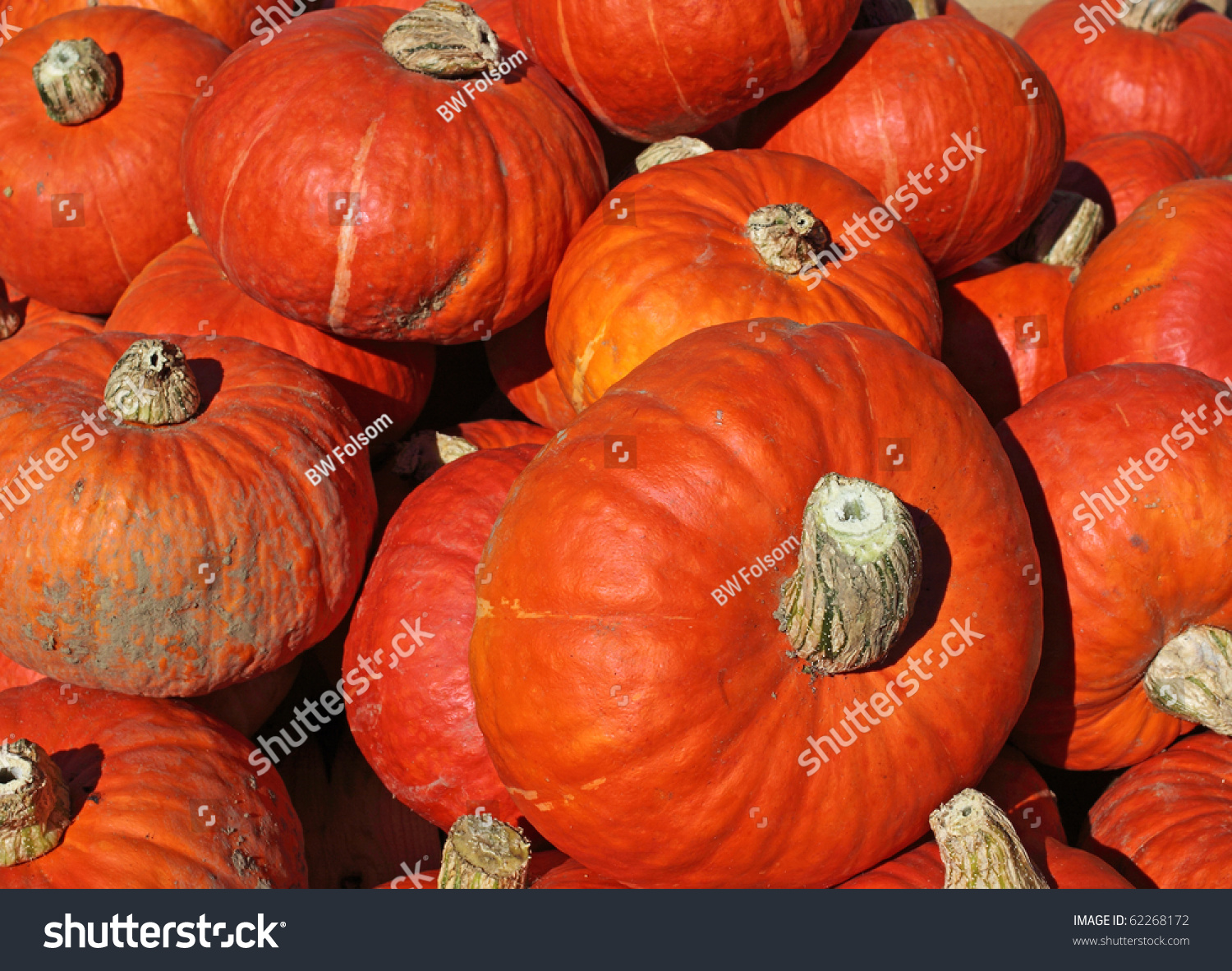 Several Recently Harvested Orange Squash In The Early Morning Sunlight. Stock Photo 62268172 : Shutterstock