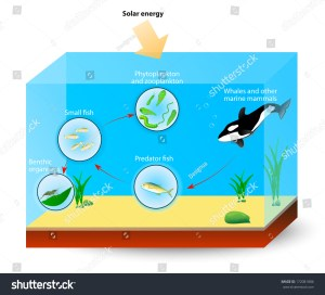Simple Marine Food Web Diagram Shows Stock Illustration 172081886  Shutterstock