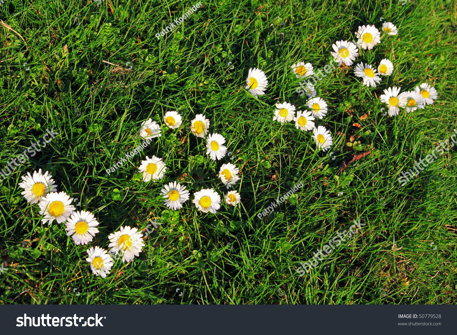 Spring Love Flowers Composition Stock Photo 50779528