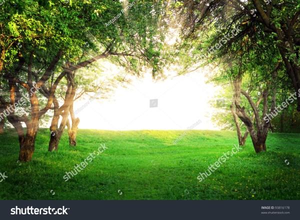 Sun Shining Through Arc Trees Stock Photo 93816178 ...