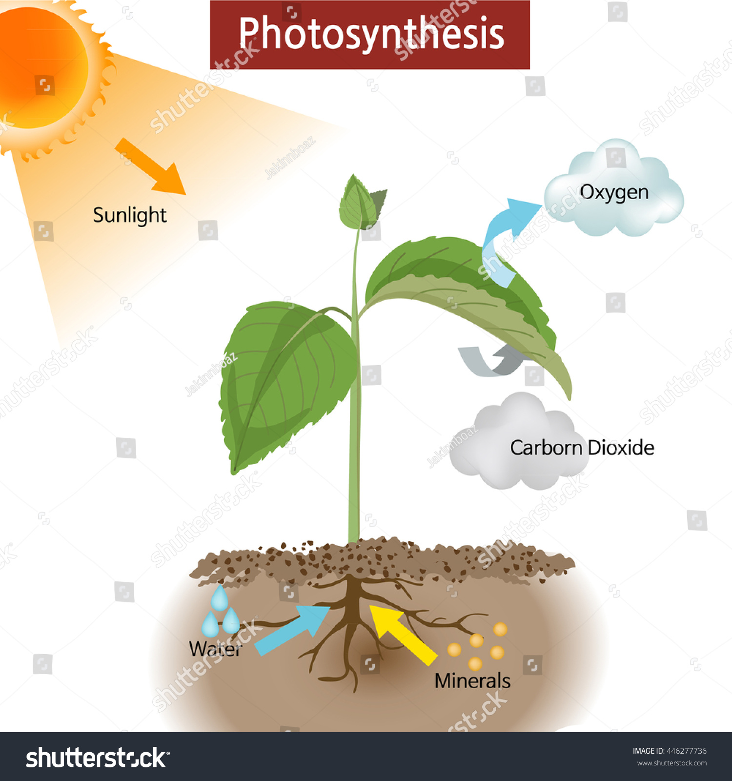 A Diagram Showing How Photosynthesis Works On Plants Stock Vector Illustration
