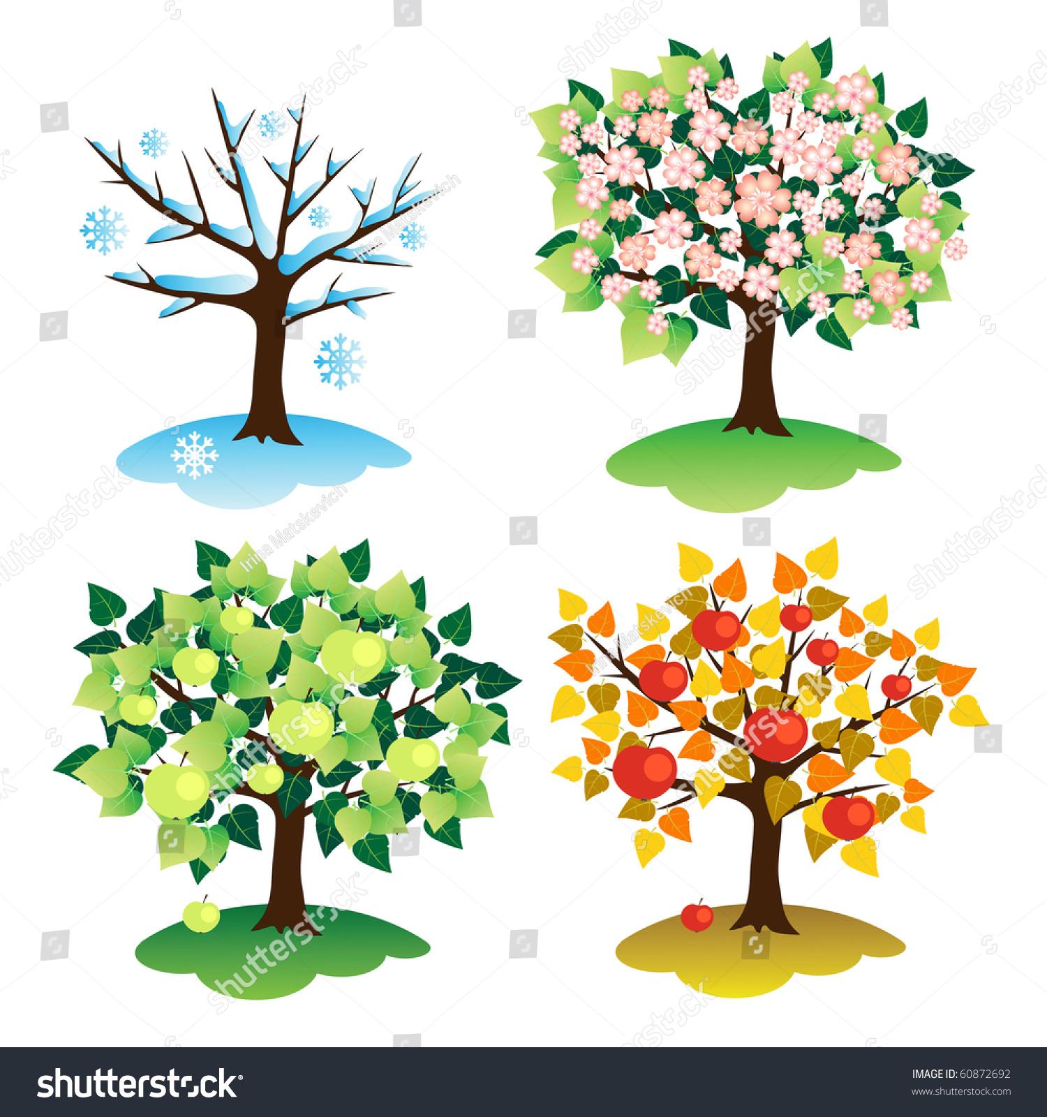 Set Trees Four Seasons Apple Season Stock Vector