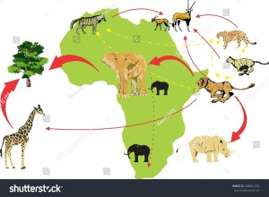 African Wildlife Ecosystem Food Chain Illustration Stock