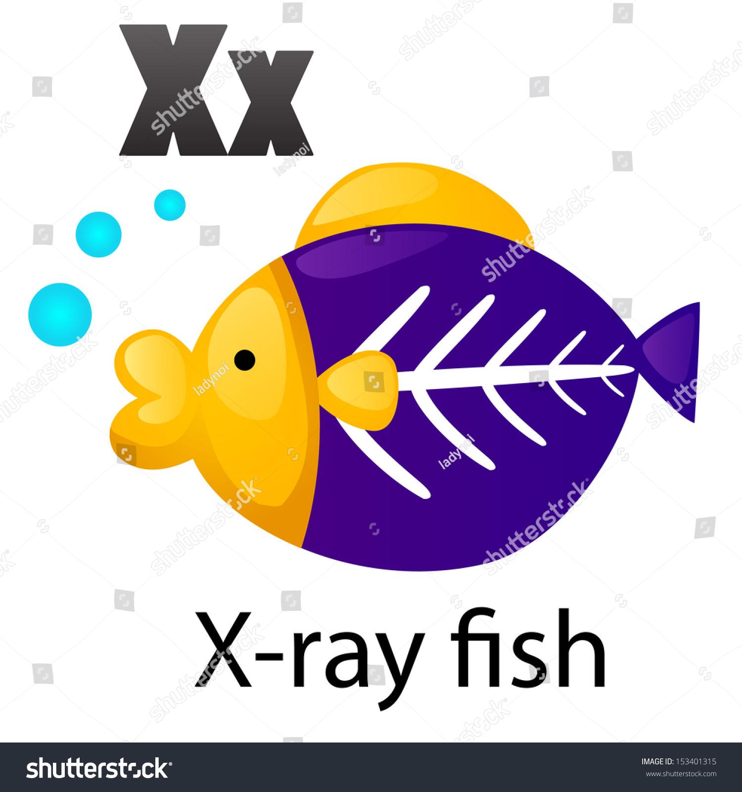 Alphabet X Xray Fish Stock Vector
