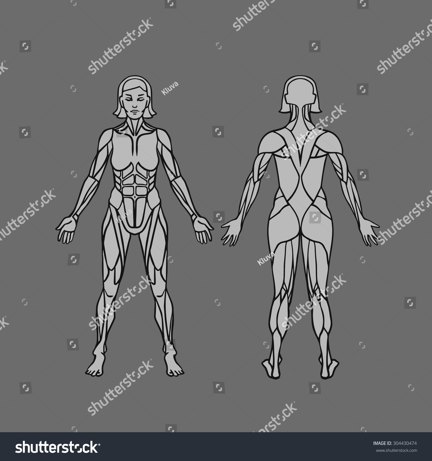 Anatomy Female Muscular System Exercise Muscle Stock