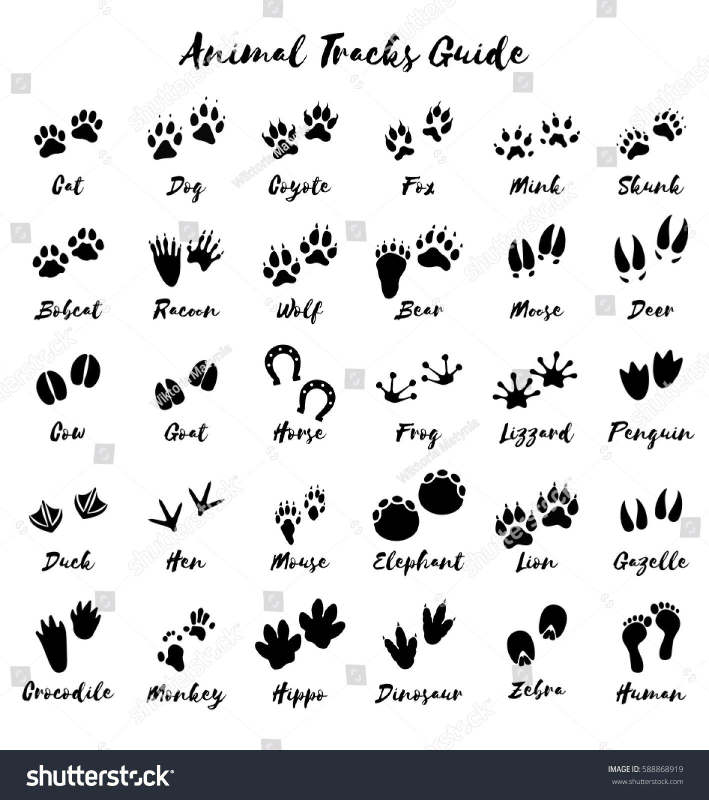 Animal Tracks Foot Print Guide Vector Stock Vector