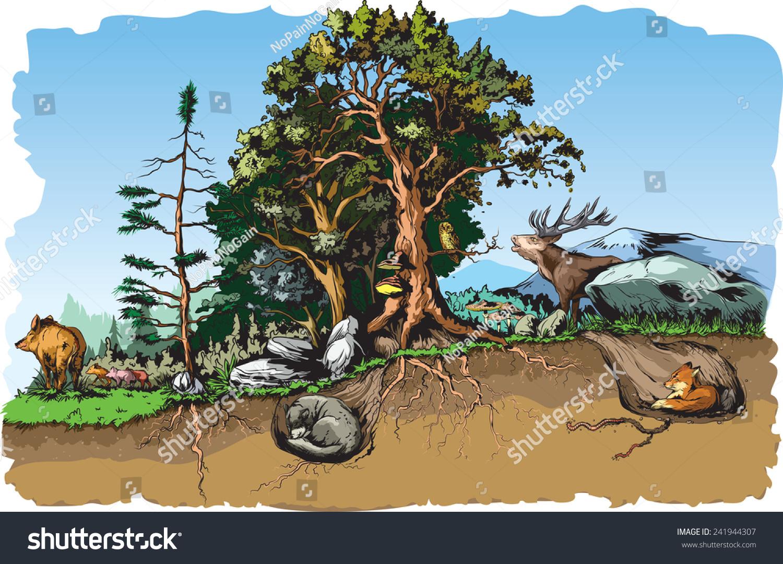 Animals Forest Habitat Stock Vector Illustration