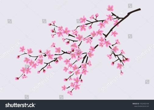 花の咲く桜の一分野、桜、花の春のコンセプト。日本とアジアの桜の花。サクラのリアルなベクターイラスト。