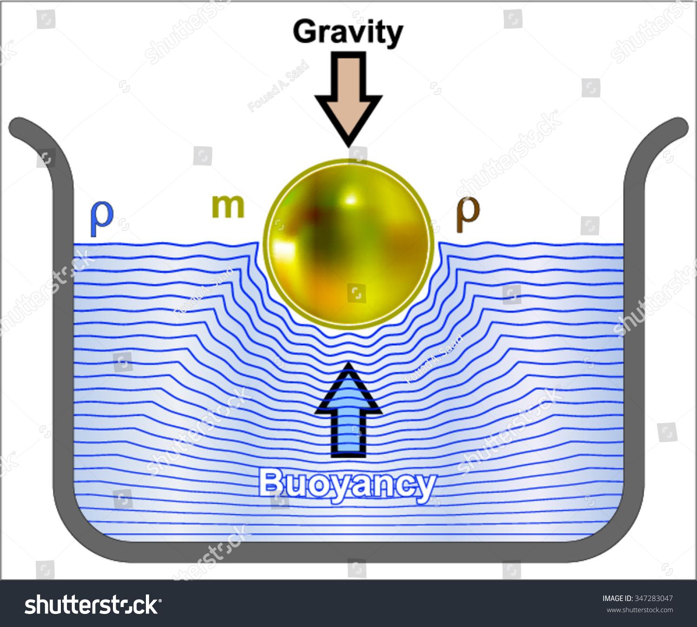 Buoyancy Buoyant Force Stock Vector