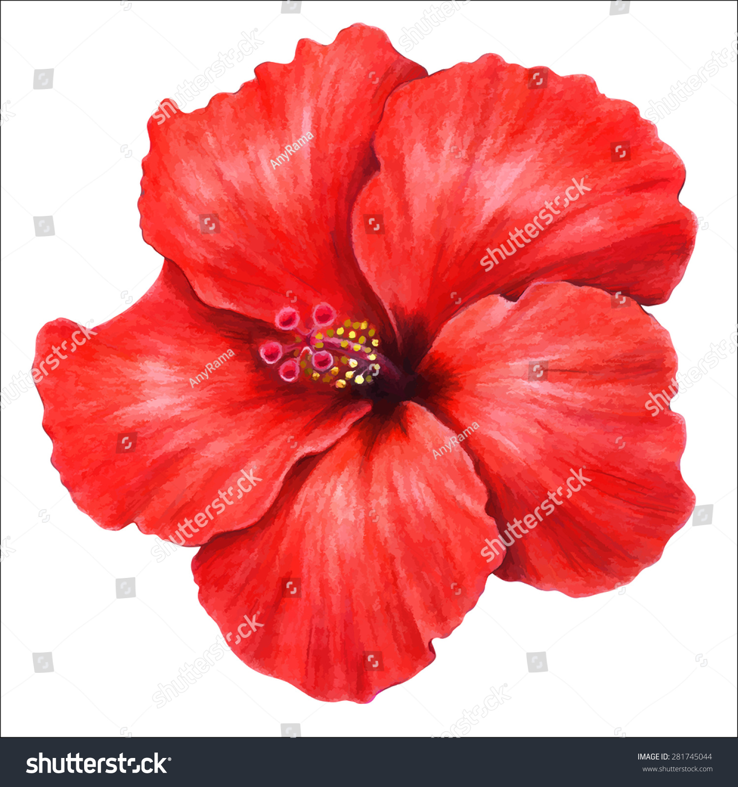 Hibiscus Red Drawing Flower