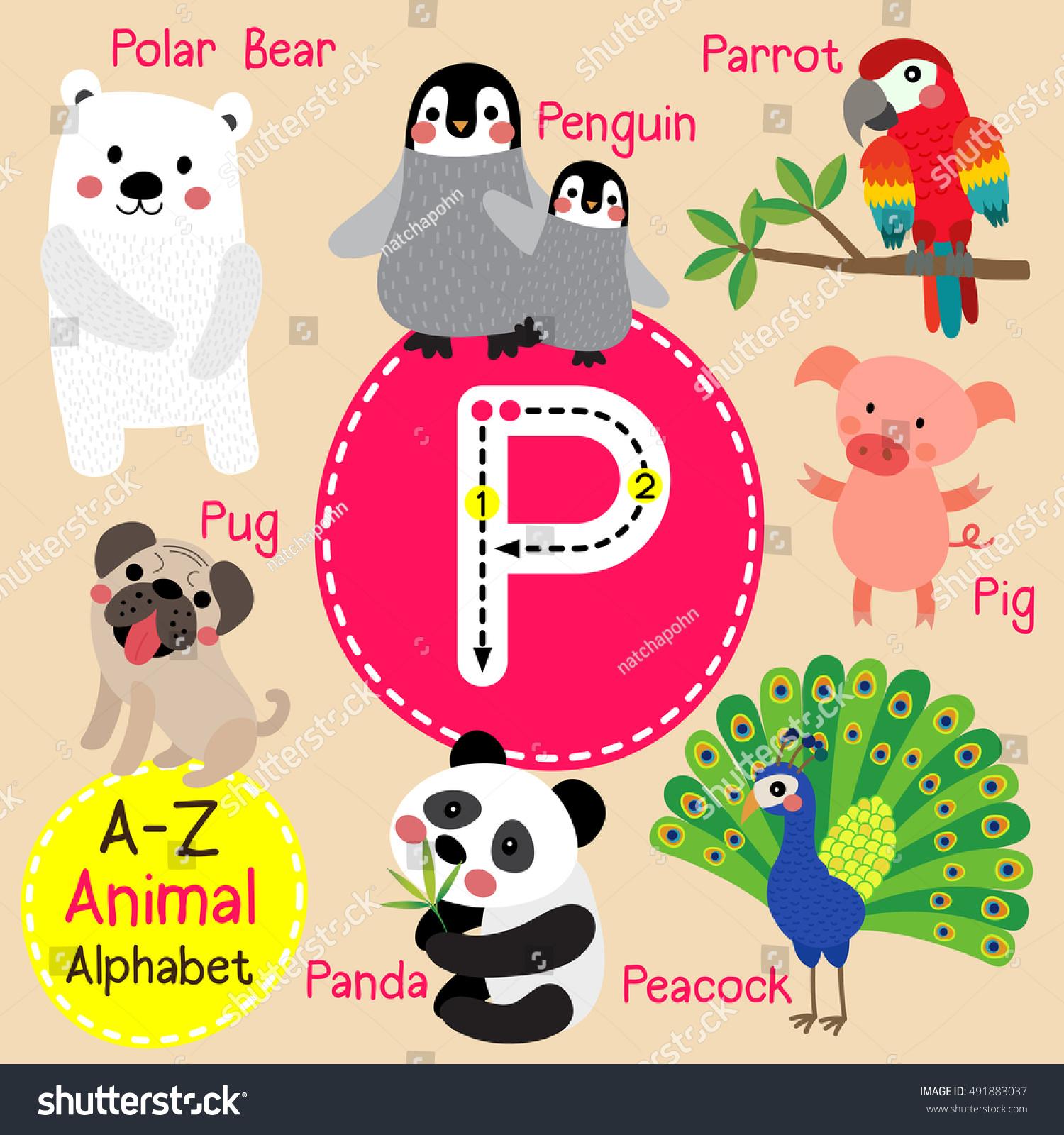Cute Children Zoo Alphabet P Letter Stock Vector