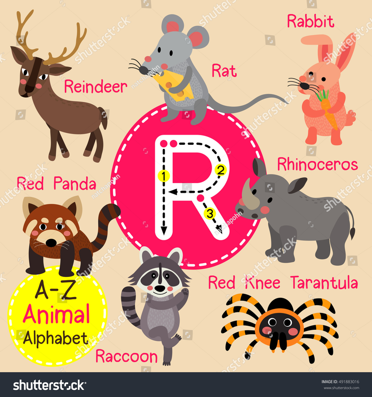 Cute Children Zoo Alphabet R Letter Stock Vector