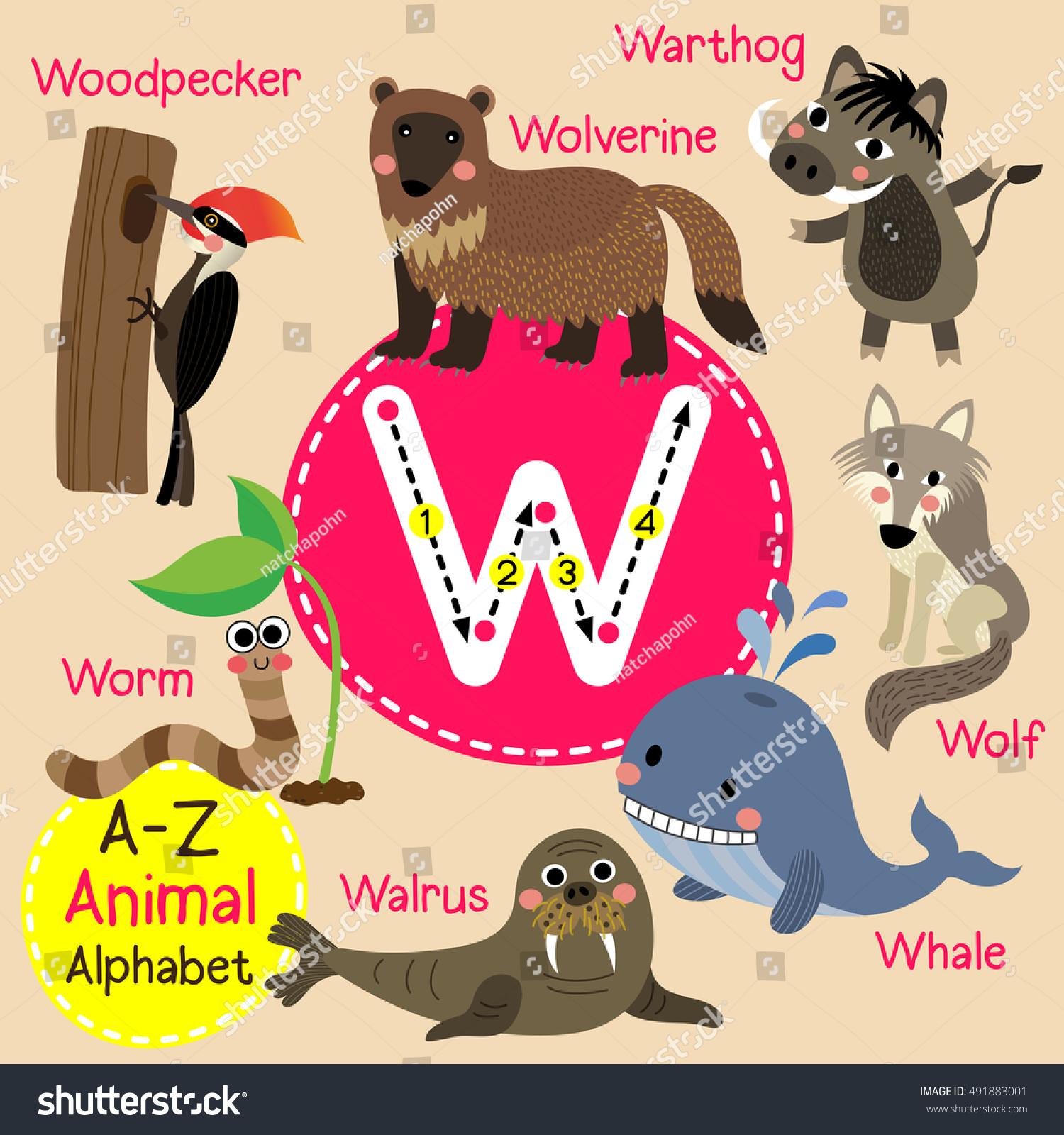 Cute Children Zoo Alphabet W Letter Stock Vector