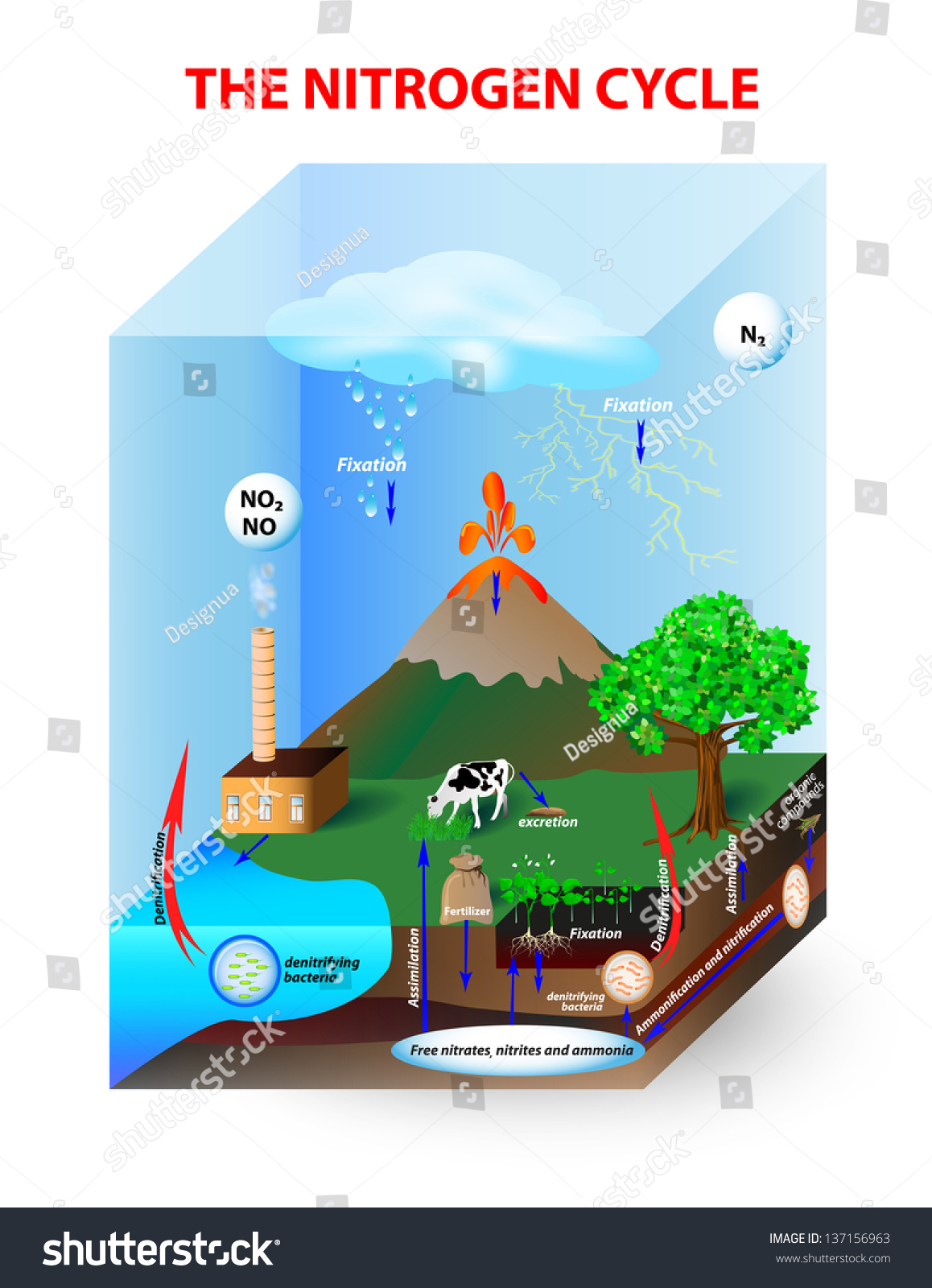 Diagram Nitrogen Cycle Process By Which Stock Vector