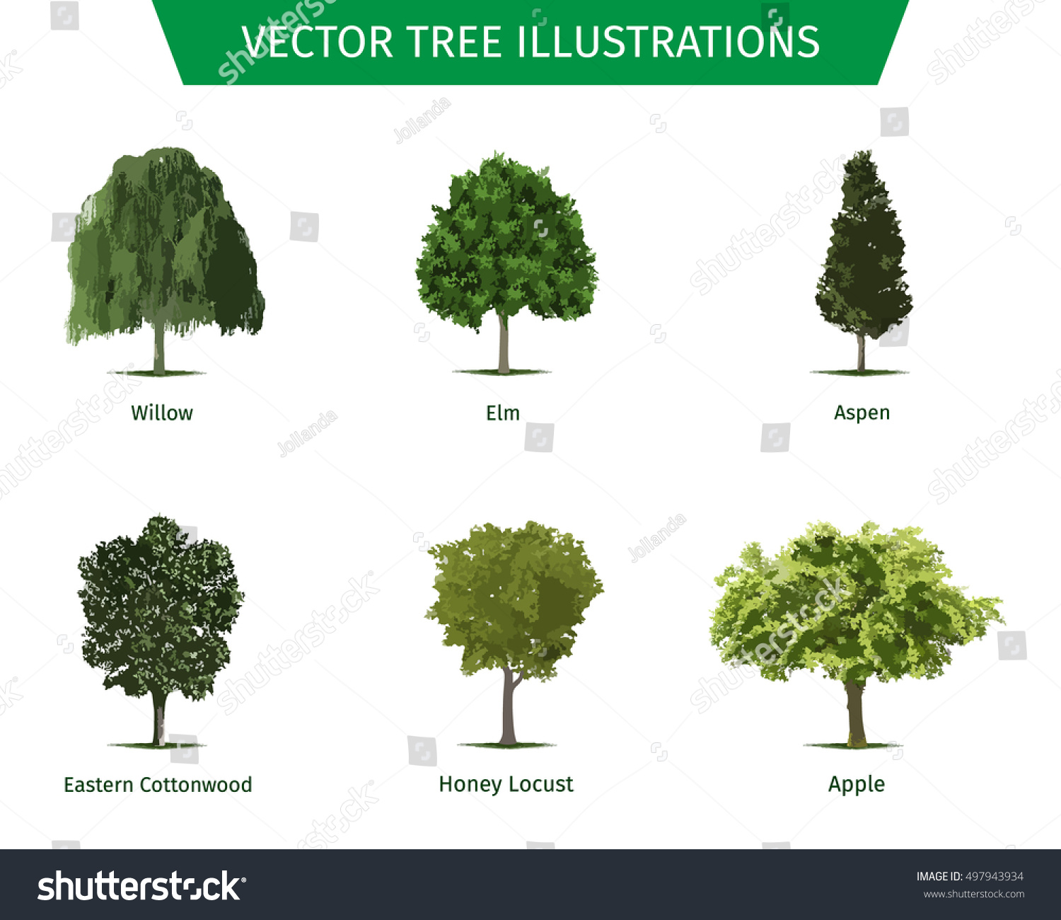 Different Tree Sorts Names Illustrations Tree Stock Vector