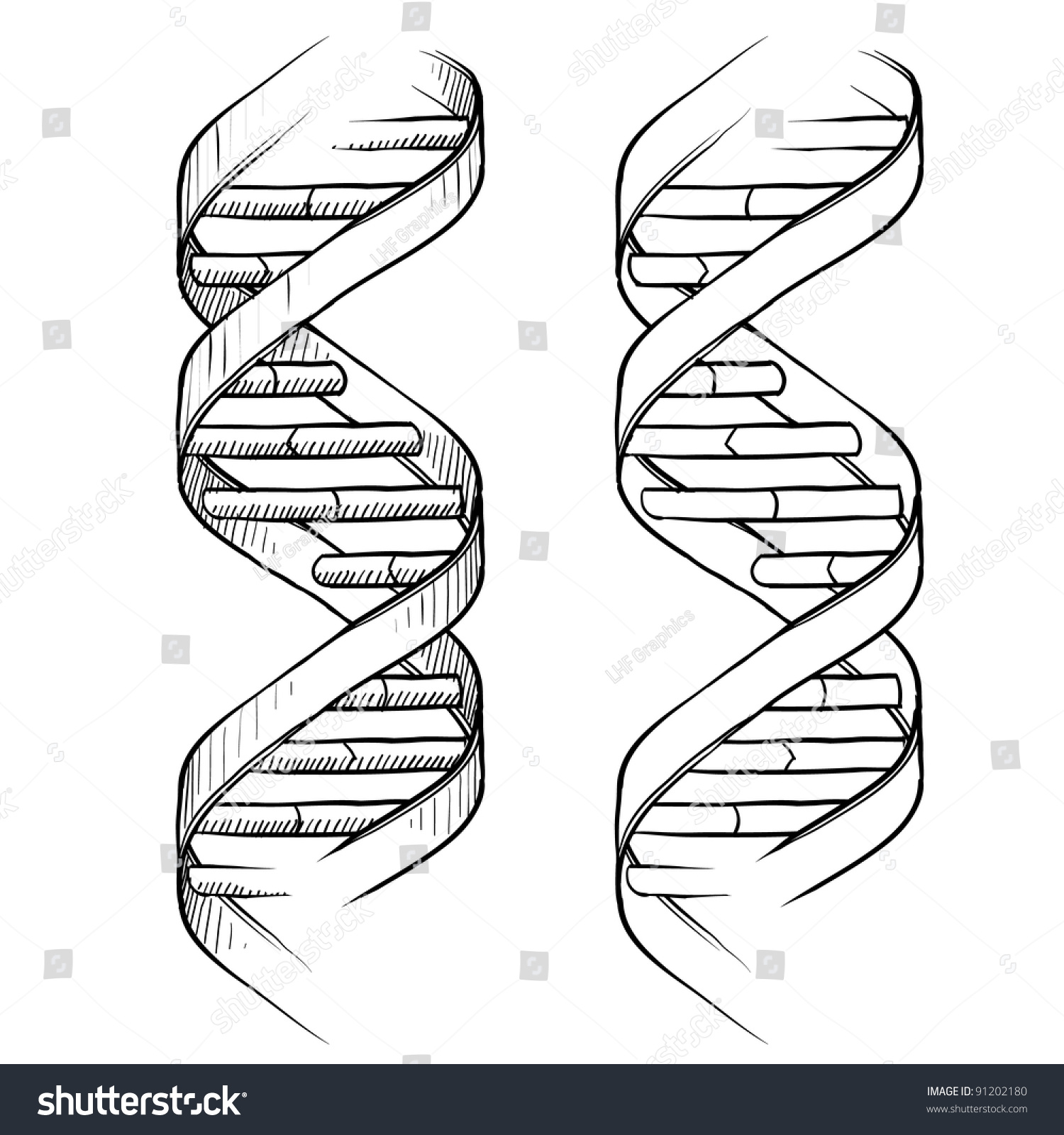 Doodle Style Genetic Dna Double Helix Stock Vector