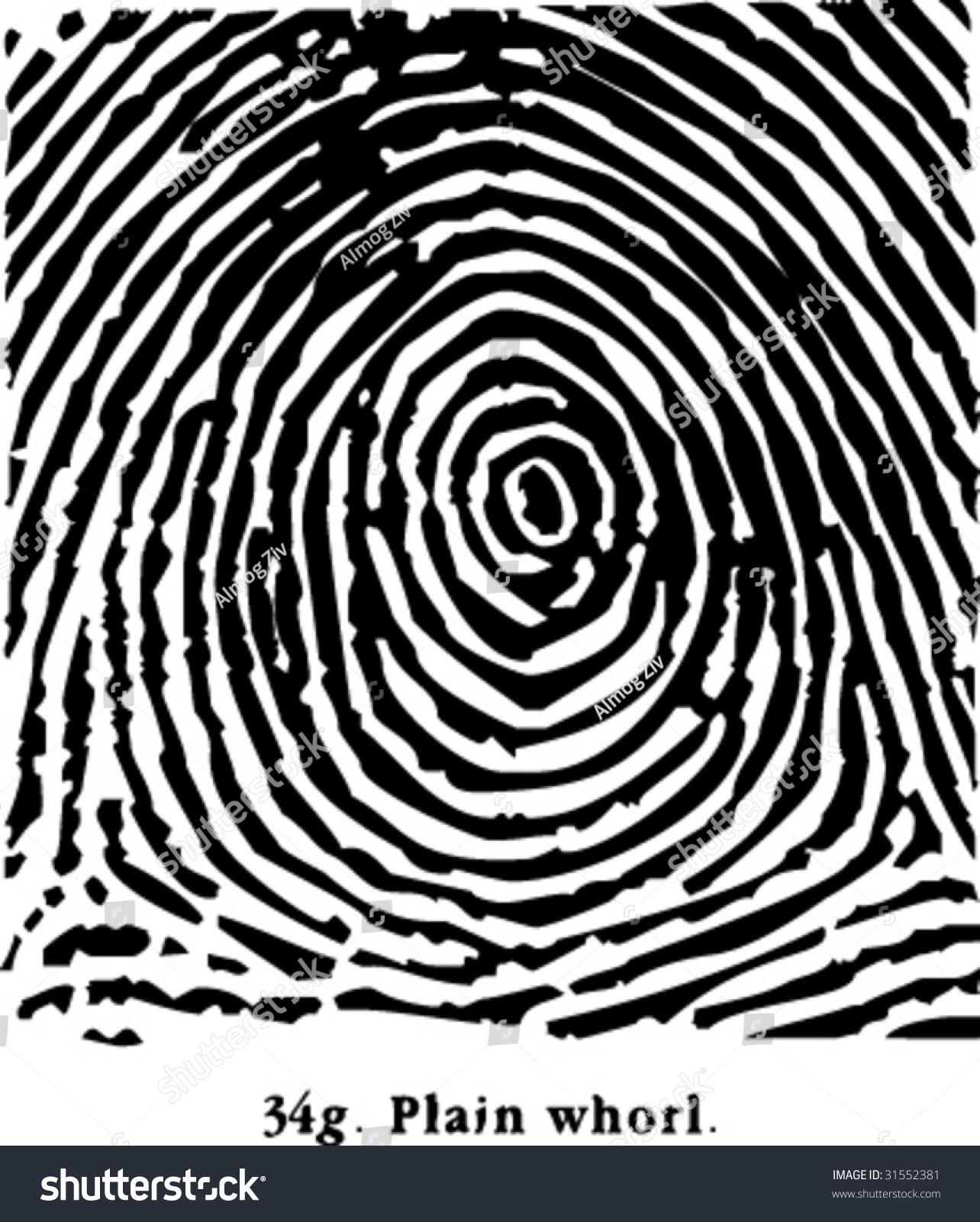 Fingerprint Plain Whorl Stock Vector
