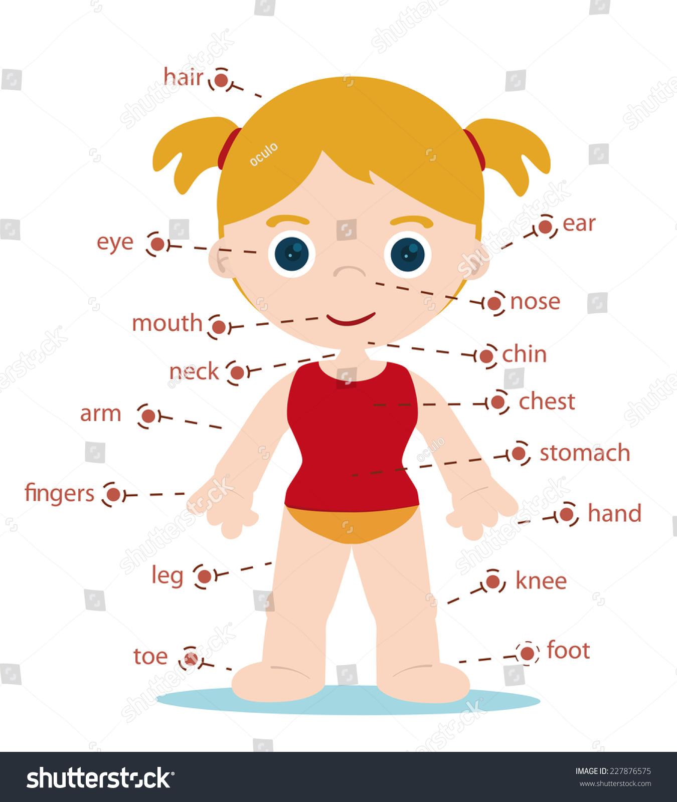 Girl Body Parts Chart School Stock Vector