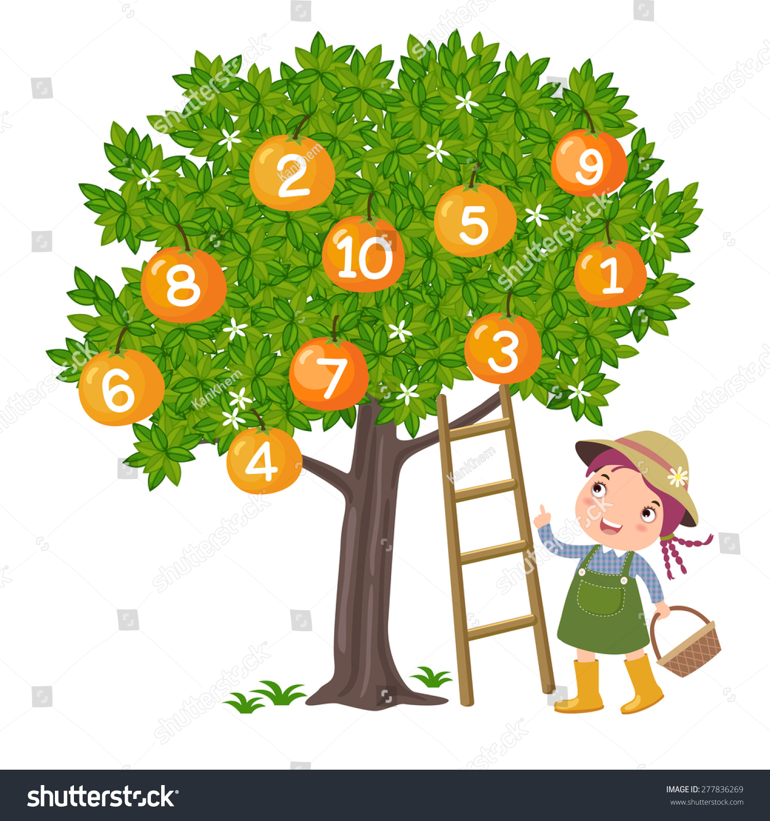 Girl Picking Orange And Counting Number