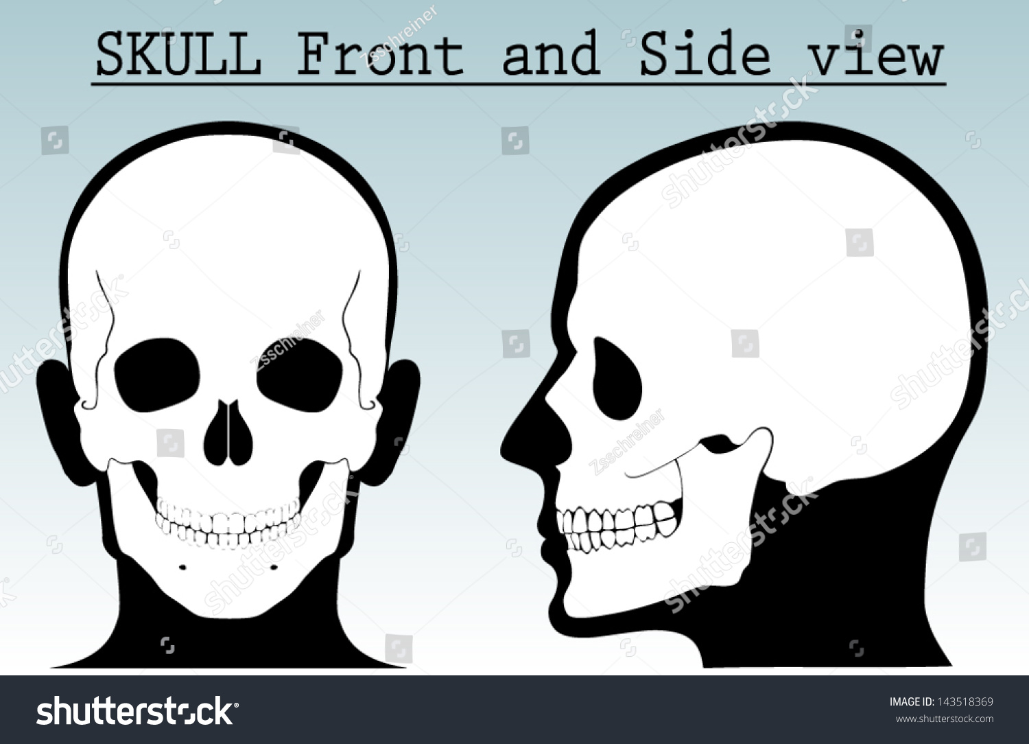 Human Skull With Silhouette Head Front And Side View