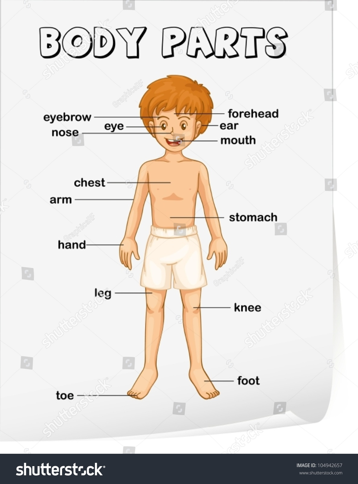Illustration Boy Body Parts Stock Vector