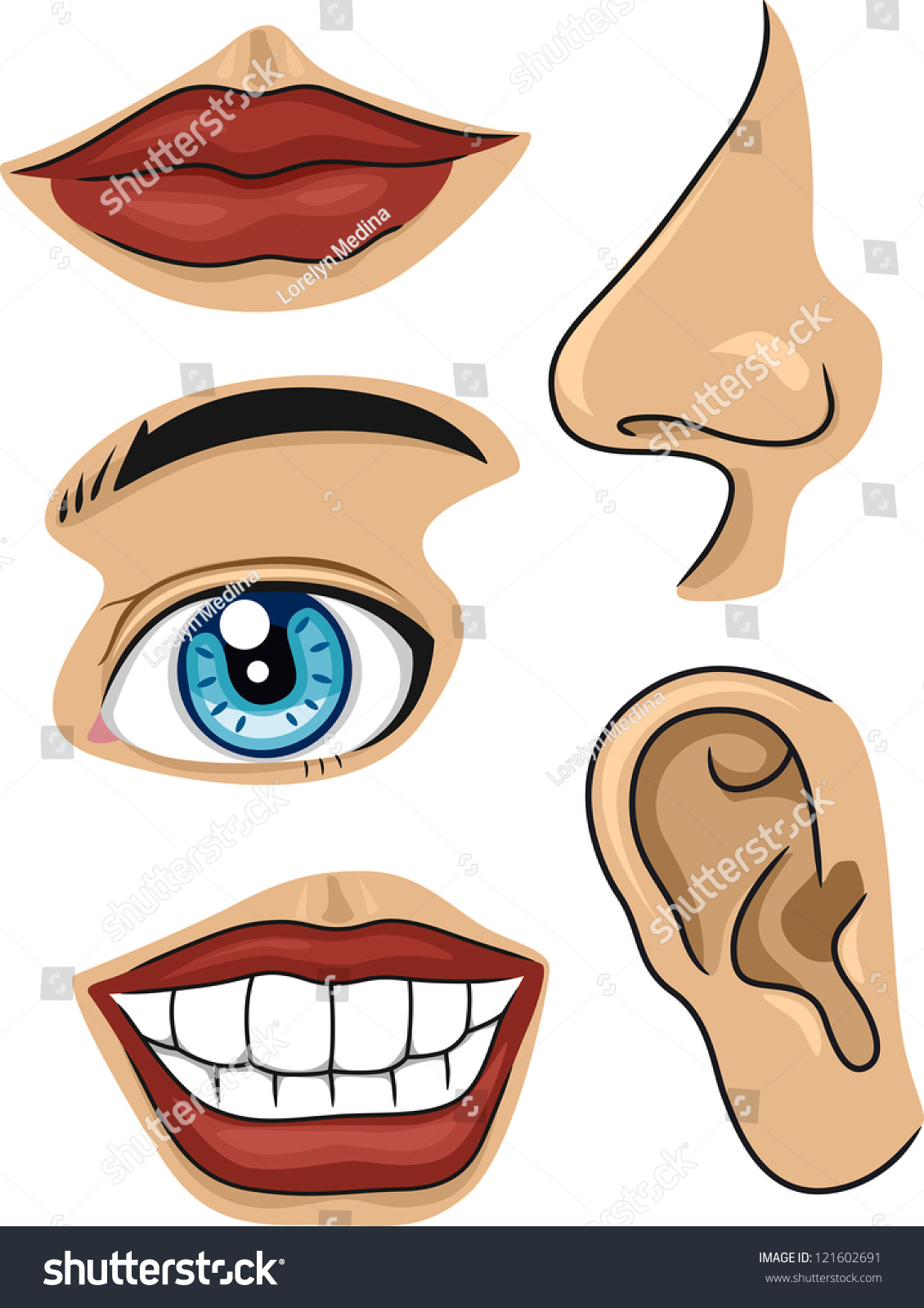 Illustration Different Parts Face Stock Vector