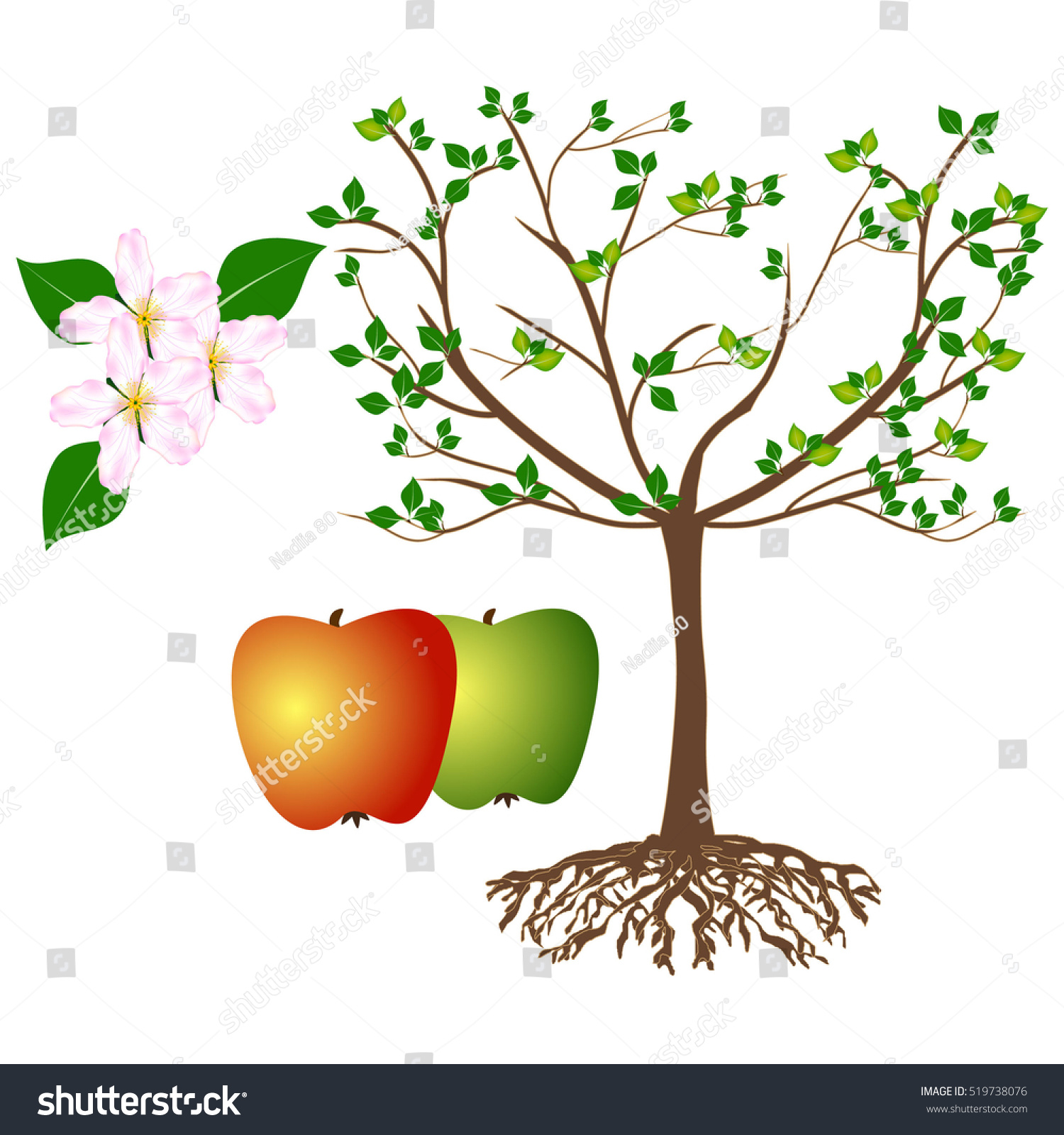 Illustration Shows Parts Plant Apple Trees Stock Vector