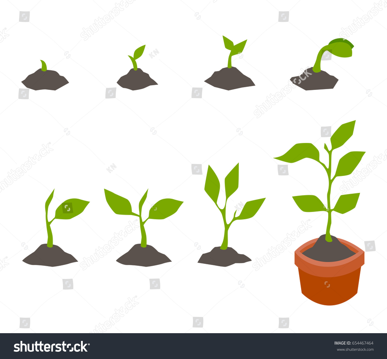 Infographic Planting Tree Seedling Gardening Plant Stock