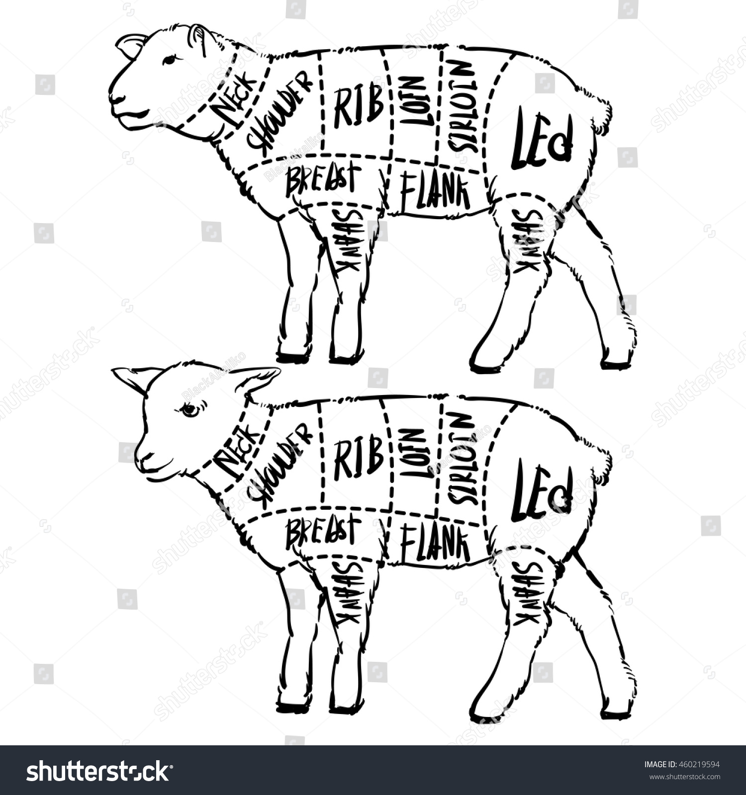 Meat cuts diagrams butcher shop scheme stock vector 460219594 meat cuts diagrams for butcher shop scheme of lamb animal silhouette lamb best cuts of meat to