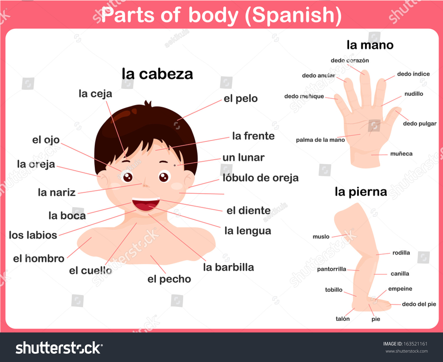 Parts Body Spanish Language Stock Vector