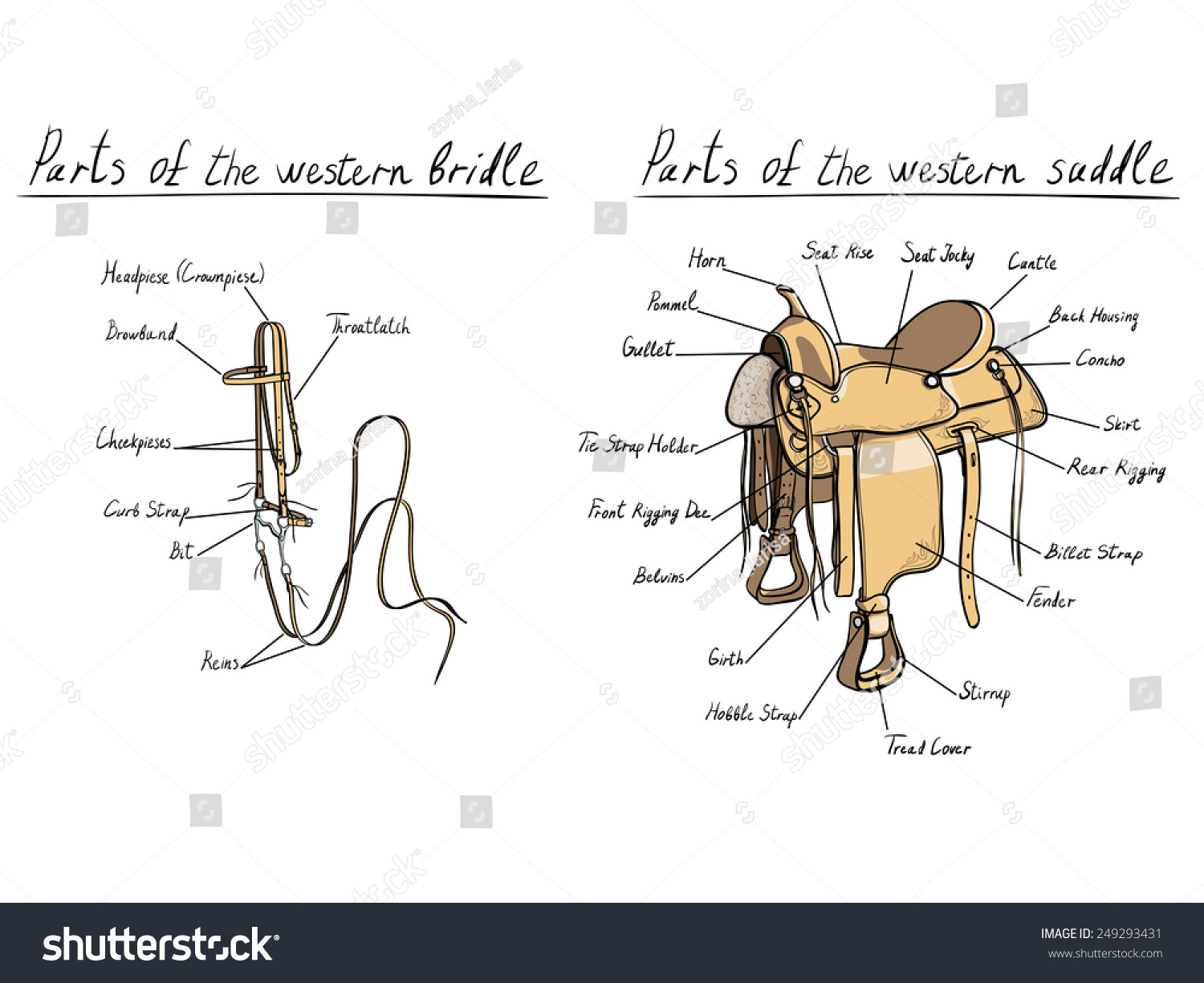 Parts Of Western Saddle And Bridle Horse Tack Stock