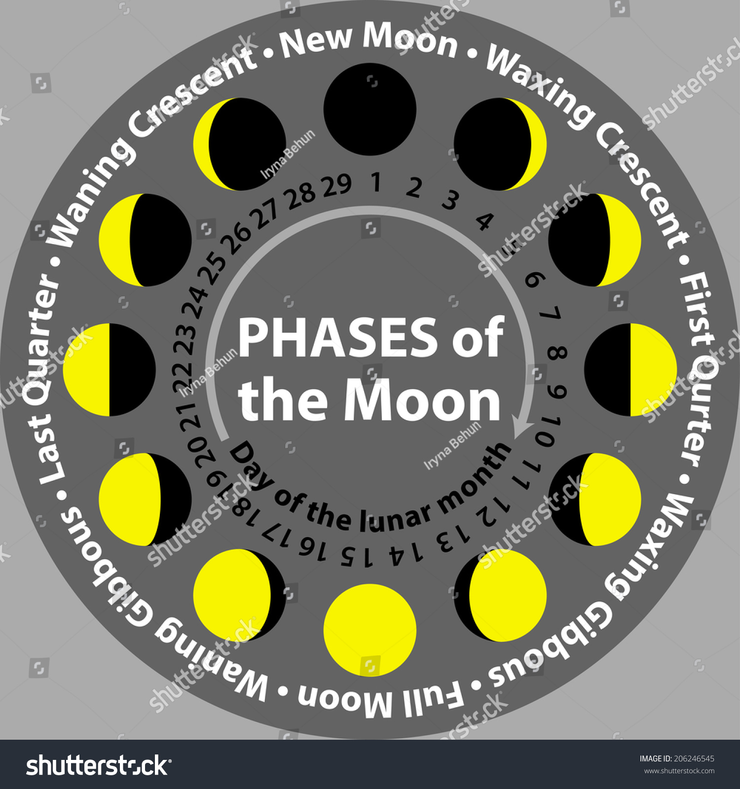 Phases Of The Moon With Days Of Lunar Month Stock Vector