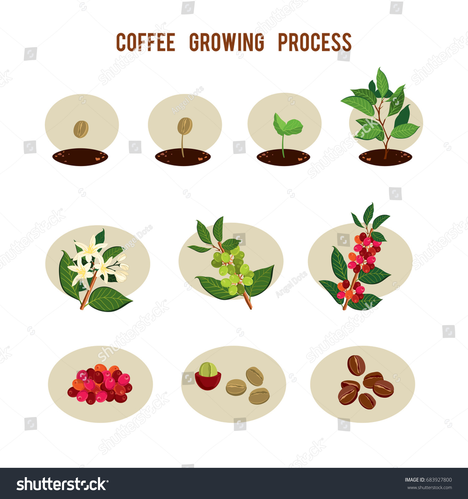 Plant Seed Germination Stages Process Planting Stock