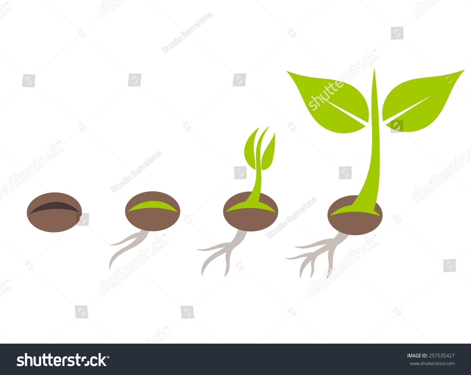 Plant Seed Germination Stages Vector Illustration Stock
